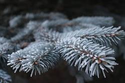 frost-1793866_640.jpg